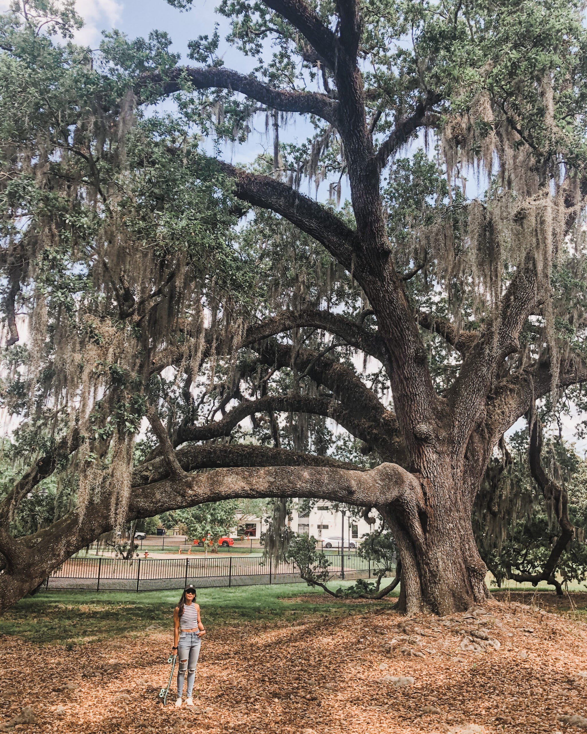 Live Oak at Constitutional Green